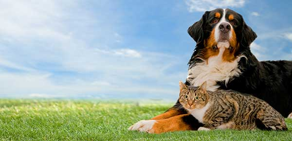AES Top Tips For Moving House With Your Pets