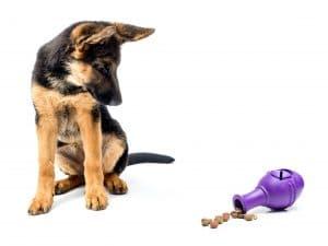 Gerrman shepherd puppy with treat release toy