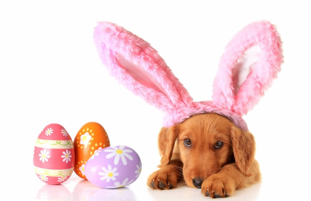 Counting Down Our Top Three Easter Emergencies