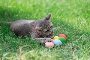 Easter cat with colorful eggs