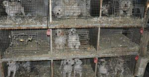 cages-puppy-mill