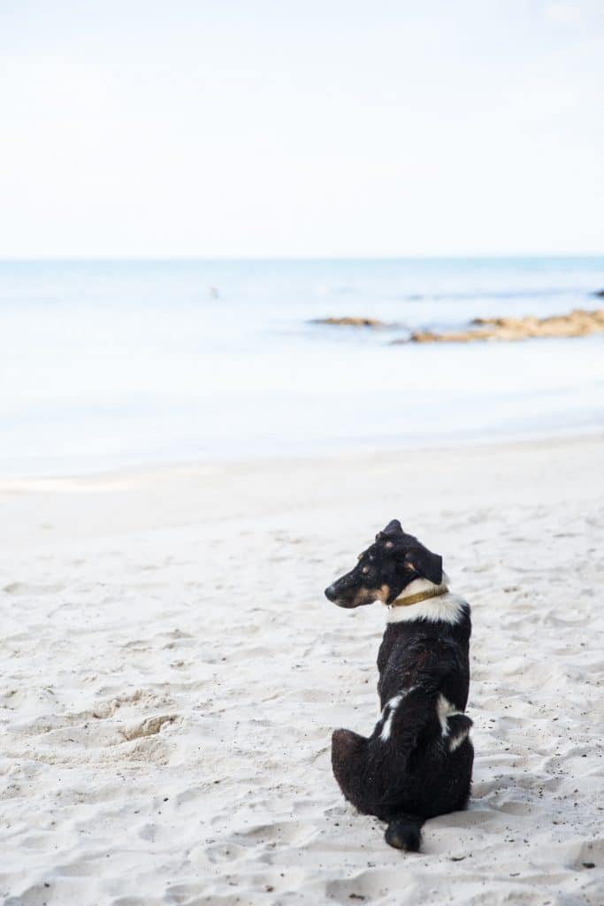 Dog on Beach 3