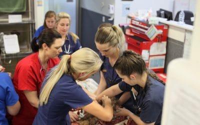 Emergency Intern Veterinarian, Tanawha (Sunshine Coast)
