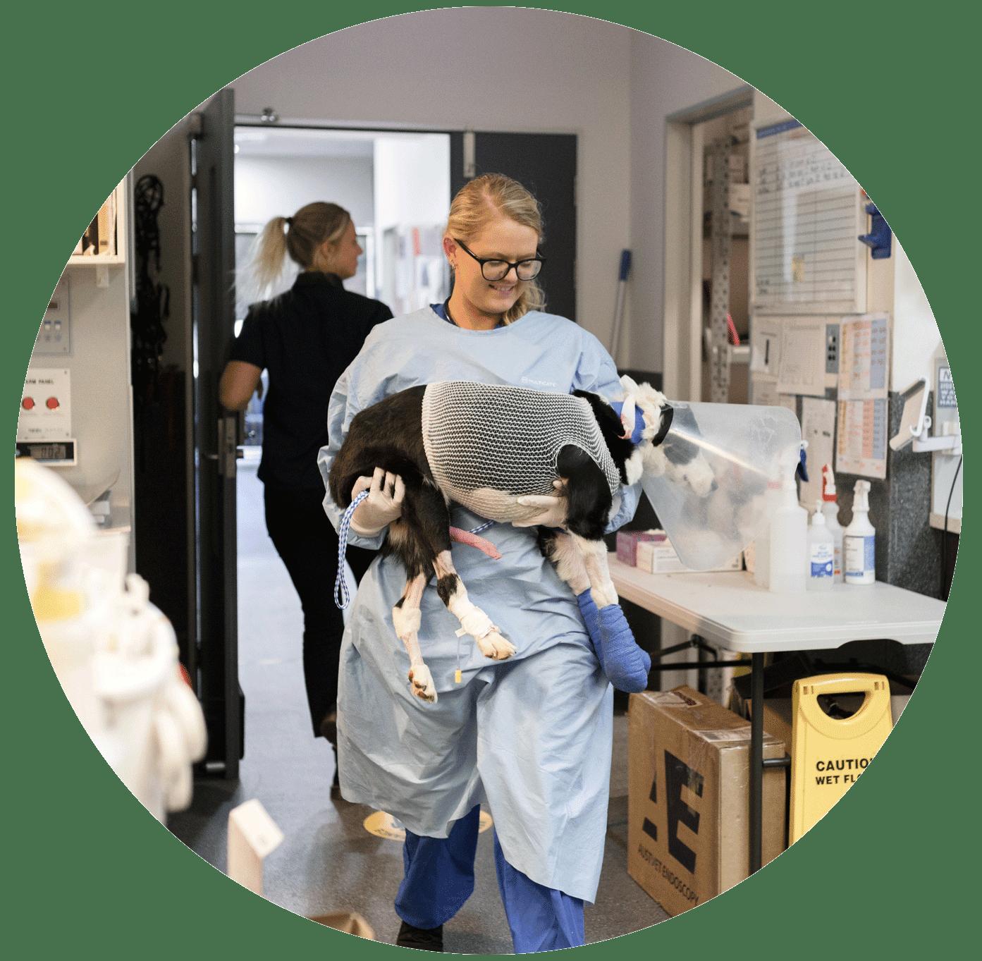 Animal Emergency Service Carrara Nurse Manager Erin Friel with a dog